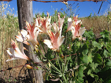 florcitas silvestres del itata