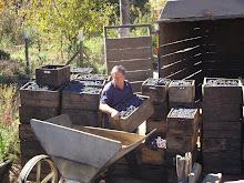 cajones de uva para hacer chicha y arrope