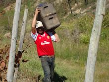 cargando los cajones de uva