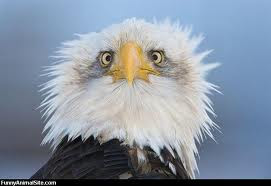 Best Eagle Ever
