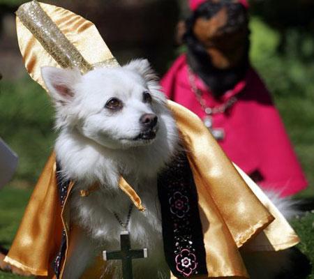 [dog+pope]