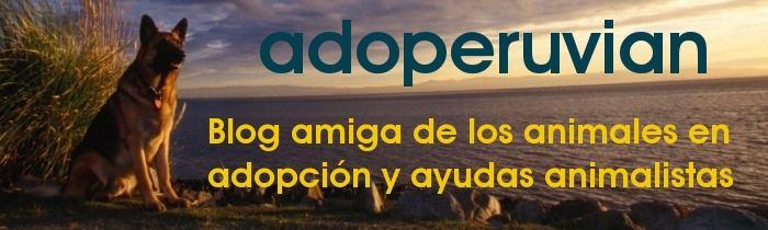 Adoperuvian : Seguimos esperando ... adoptanos !