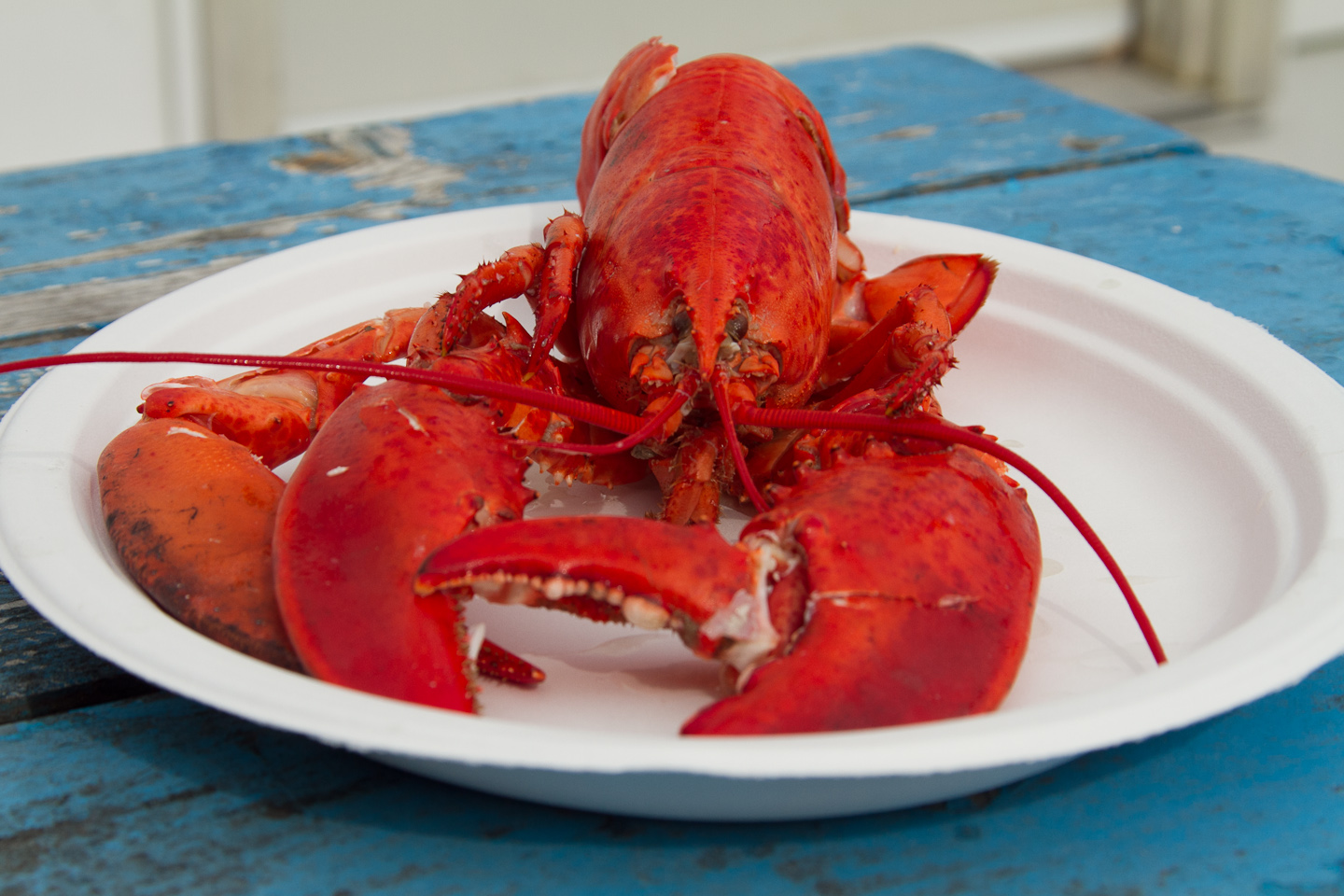 When our cooked crustaceans arrived on paper plates we practiced out photography skills proudly snapping pictures and then tore into the delicacies. & By~Lander~Sea Food Tales: Luscious Lobster In Nova Scotia