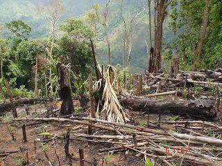 Billede: afbrænding af skov til landbrug