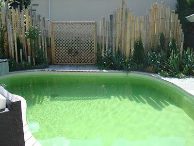 Cr ateur installateur de piscine naturelle en haute for Constructeur de piscine naturelle