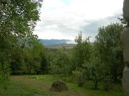 Minadze