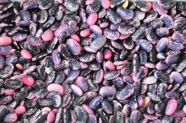 daylesford organics scarlet runner beans