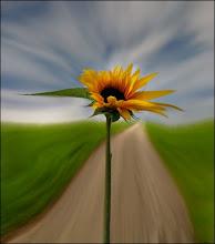 No hay mayor placer que el de encontrar un viejo amigo, salvo el de hacer uno nuevo. Rudyard Kiplin