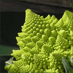 Green fractal cauliflower