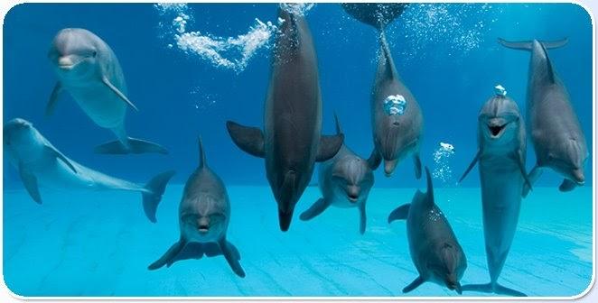Delfini per cena.: verità nascoste