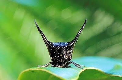 Foto: Serangga Unik Dari Amazon