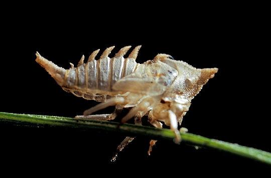 Serangga-serangga Unik Dari Amazon [ www.BlogApaAja.com ]