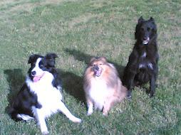 Fly, Spot e Jessy