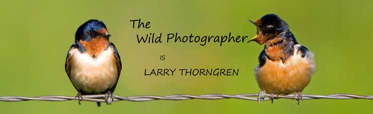 The Wild Photographer