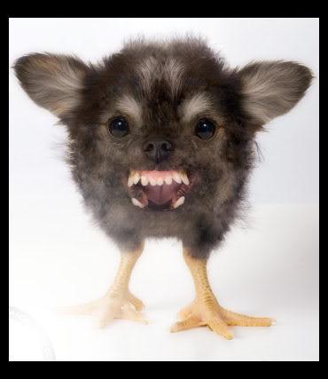 Cat Photoshop Funny Cute Animals Animal Kingdom Funniest