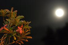 disinari bulan