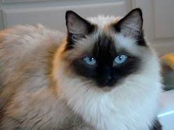www.floppycats.com
