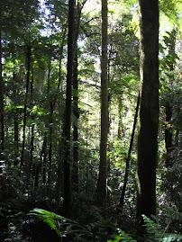 Habitat Anoa