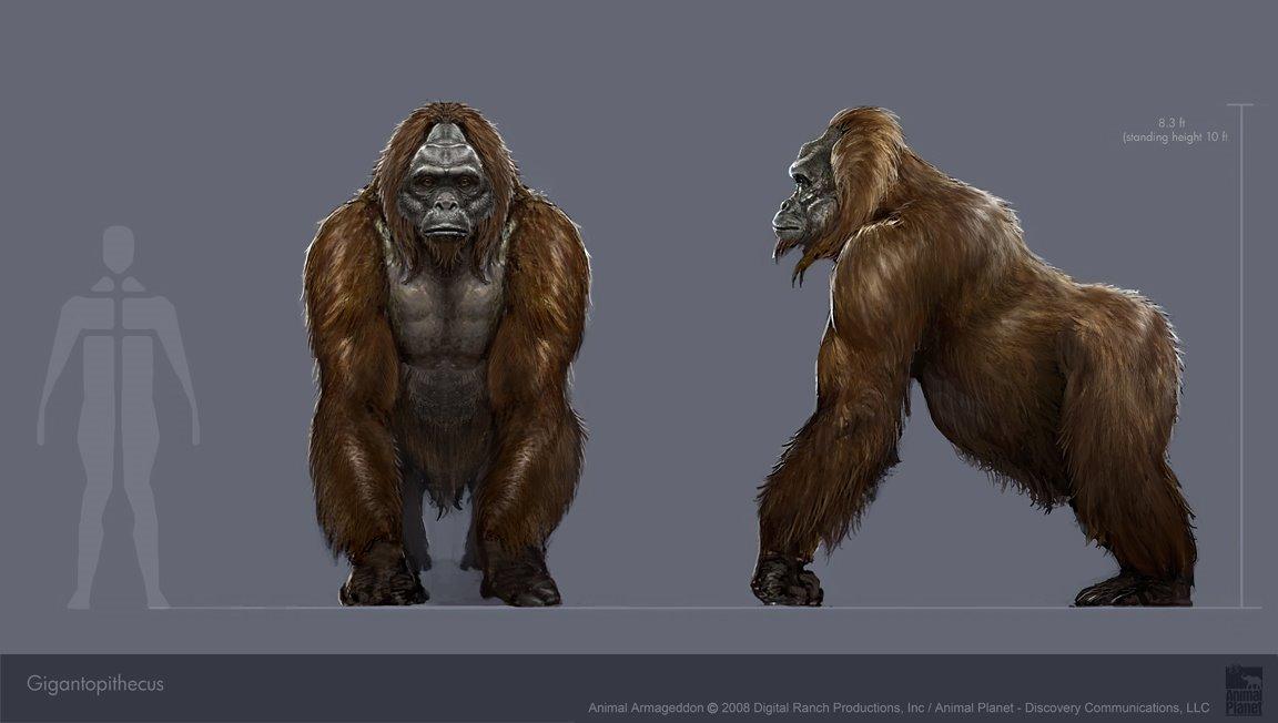 Gigantopithecus Marsl Knows Creatures:...
