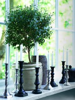 Προσοχή στα φυτά δίπλα σε παράθυρο