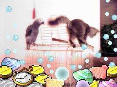 القط عنتر والببغاء لولو