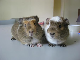 The twins - Evolet and Neytiri