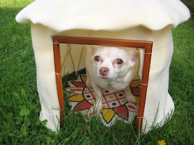 doggie yurt