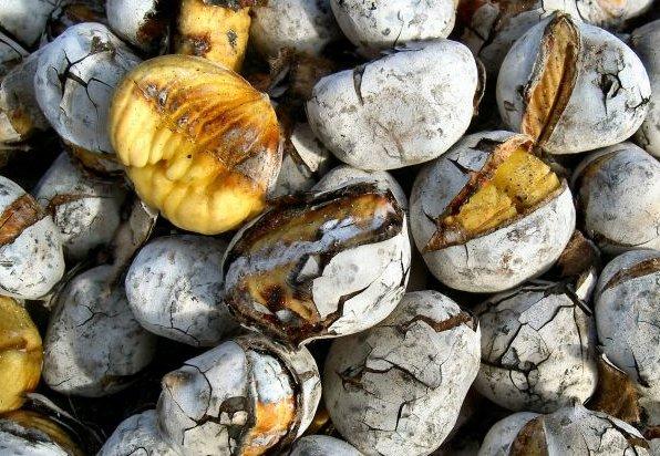 Oferta de castanhas assadas em Liboa e Porto