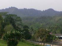 Panorama Hutan di Pahang