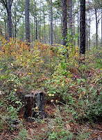 Click for Larger Image of Big Thicket