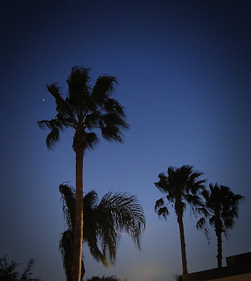 Click for Larger Image of Venus Through the Palms