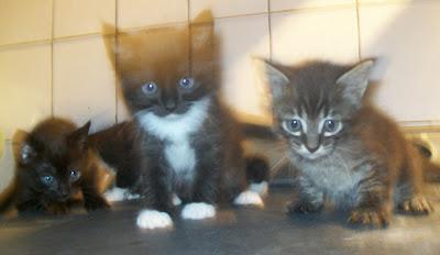 5 gatinhos para doação, <span class=