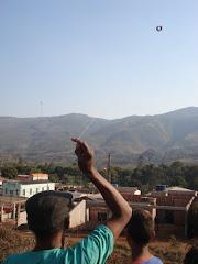 colibri alçando vôo