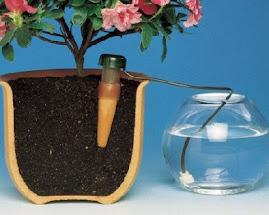 Nawadniacz Blumat do podlewania roślin