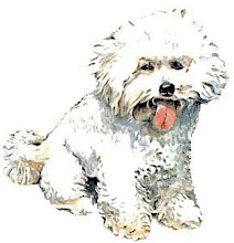 Bichon Lover Blogs Here