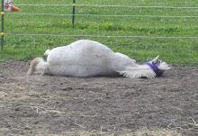 Sleepy Pony!