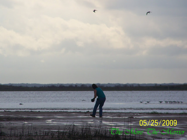 Hubby being dive-bombed by birds
