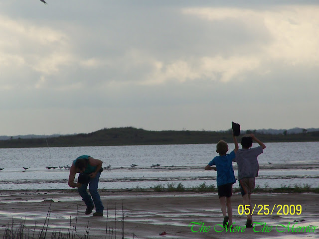 Boys running to help Hubby being attacked by birds on beach