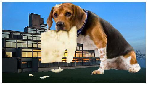 Do Dogs Really Eat Homework?   Wonderopolis