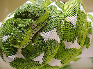 TheJungleStore.com blog - Heat-Seeking Boa Constrictors