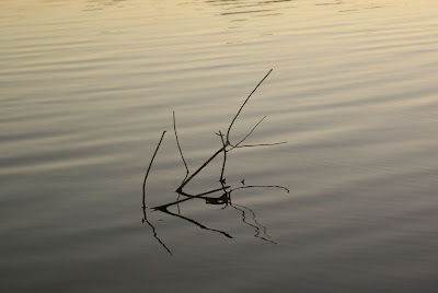 Twigs in the fading light of the sun at Pachmarhi Lake