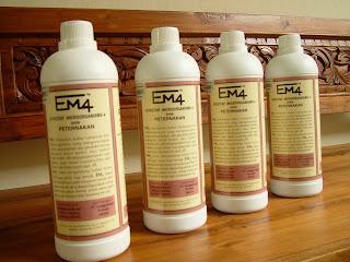 Memperbanyak EM4 dengan cara mengkultur bakteri dalam EM4