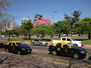 Here in Buenos Aires, the cherry trees are blooming pink and bougainvillea . buenos aires