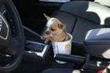 The Tiny Dog Sitting In A Cup Award