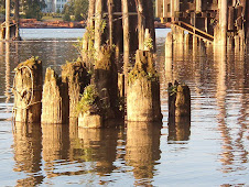 Forgotten Pilings in the Fraser River