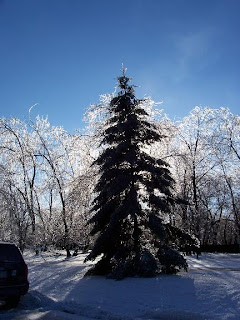 After the ice storm, Ancaster, Ontario