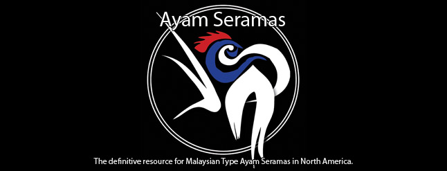 Ayam Seramas