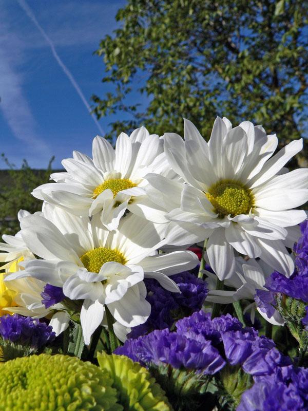 tipos de flores. Los tipos de flores