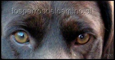 """""""Los ojos de un animal tienen el poder de hablar lenguaje sin palabras..."""""""