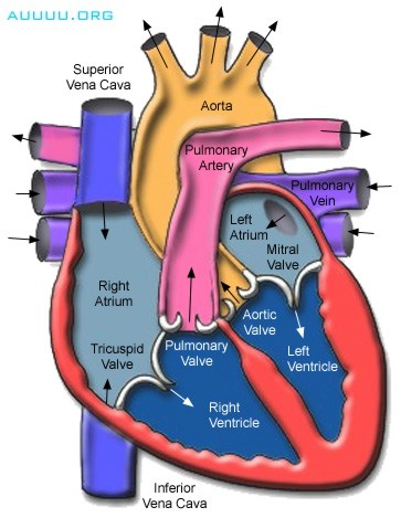 EduMission: Form 3 Science: Chapter 2 - Heart